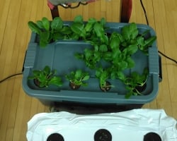 Growbox in use