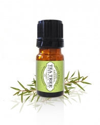 Essential Oils TeaTree