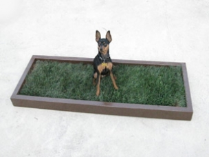 small grass dog potty