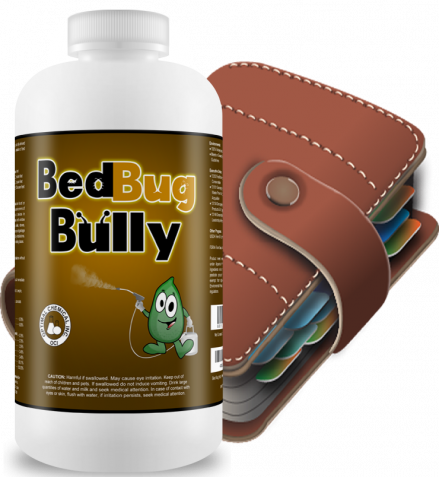Bed Bug Removal Procedures