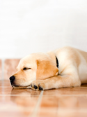Waukesha Pet Urine Treatment