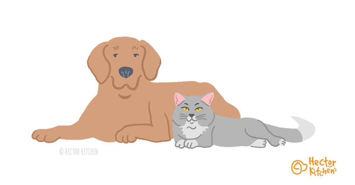 Première rencontre : Comment réussir à faire cohabiter chien et chat ?