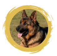Addiction Pet Food - GSD