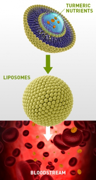 An infographic of liposomes protecting turmeric nutrients so they can be absorbed into the body via the bloodstream