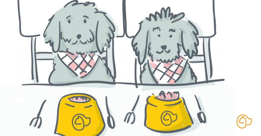 🐶 Croquettes pour chien : quelle quantité lui donner ...