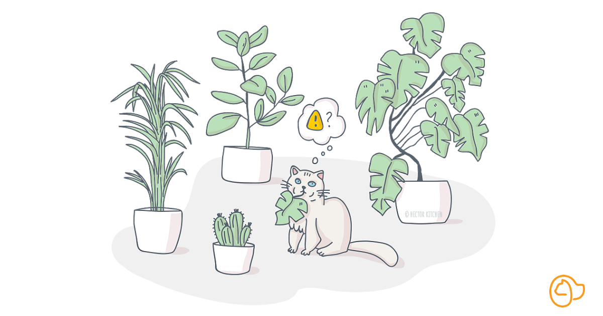 Plante toxique chat