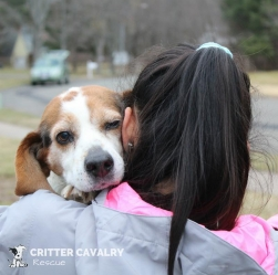 Critter Cavalry | An Animal Rescue | Franklin, TN