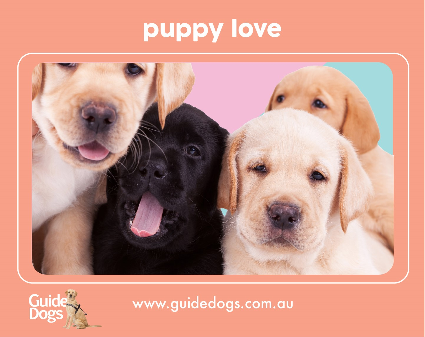 Image shows the free fridge magnet which you'll receive when you request your Gift in Will guide - magnet contains a photo of 4 puppies and has the url of the main Guide Dogs website at the bottom www.guidedogs.com.au