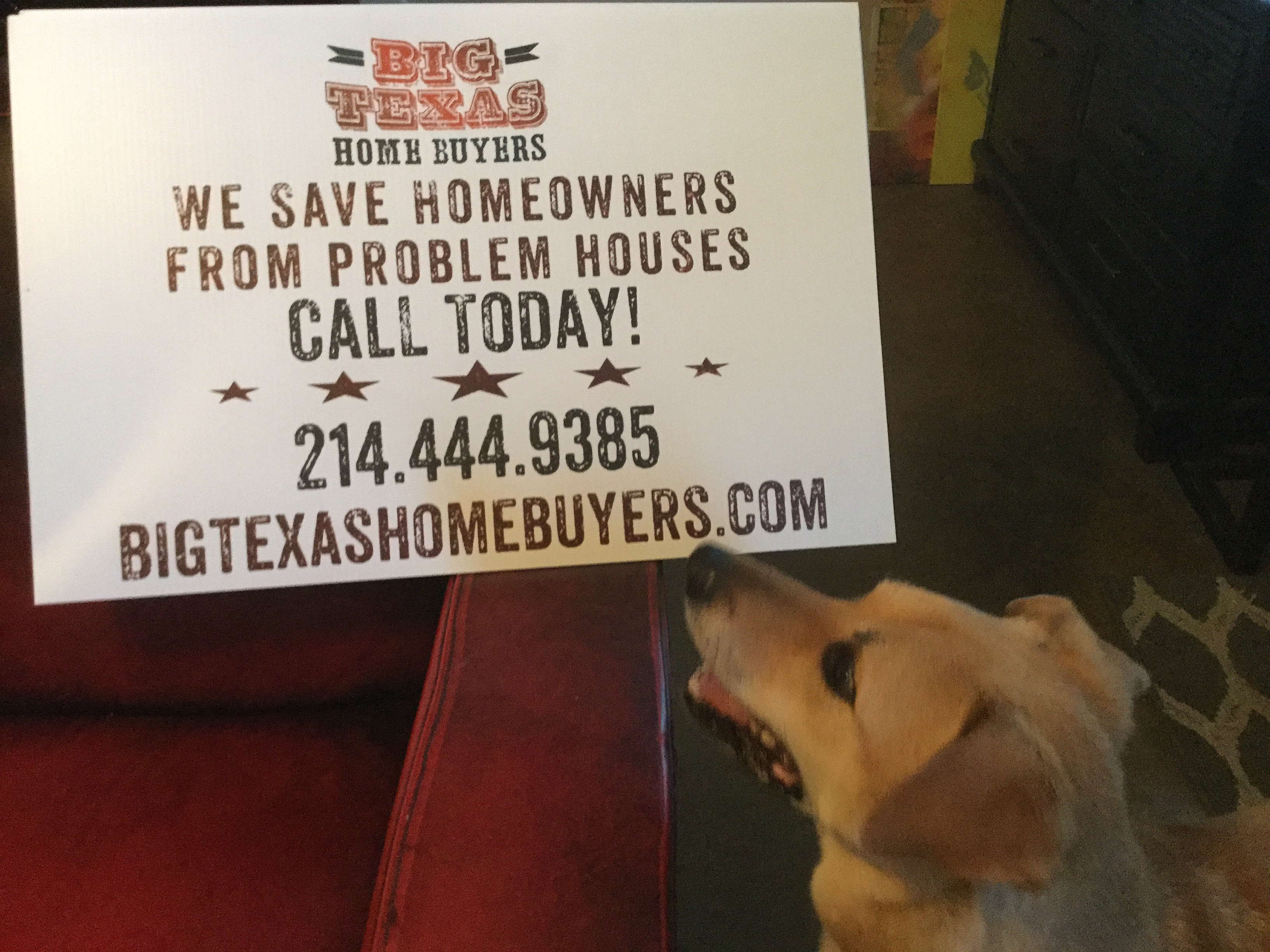 Dogs love Big Texas Home Buyers