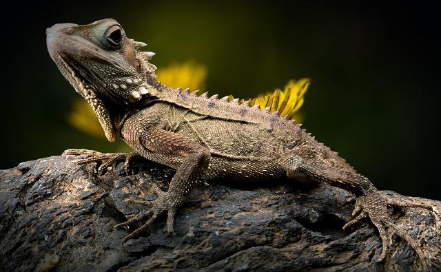 Hotspot di biodiversità