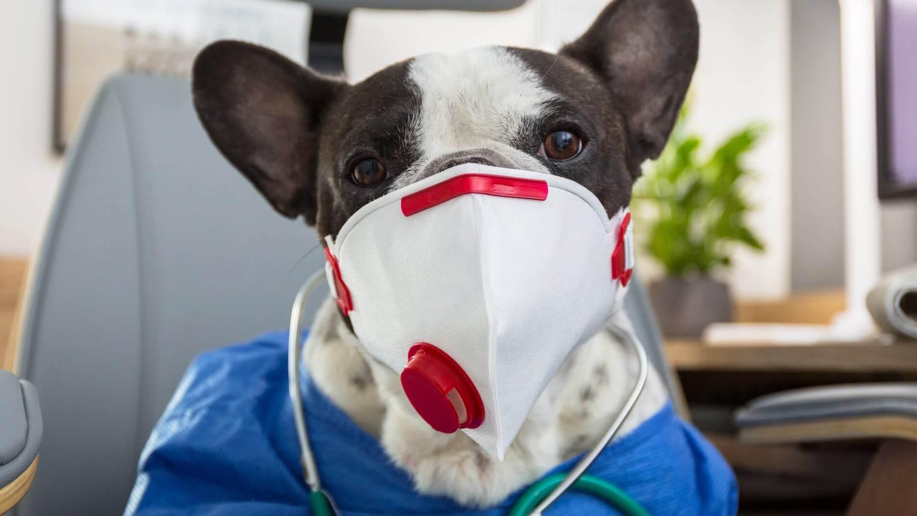 49694035-0-chien-coronavirus-ma.jpeg